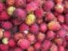 wonderfulwomenberries