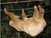 sloths-cahuita-national-park